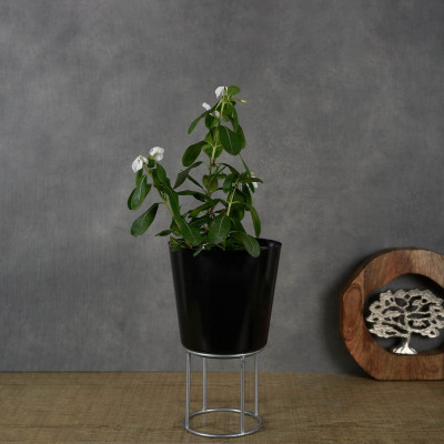 Manor House Black Planter with Metal Riser 11.5 inches